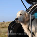 hundegitter-urlaub-auto-reise