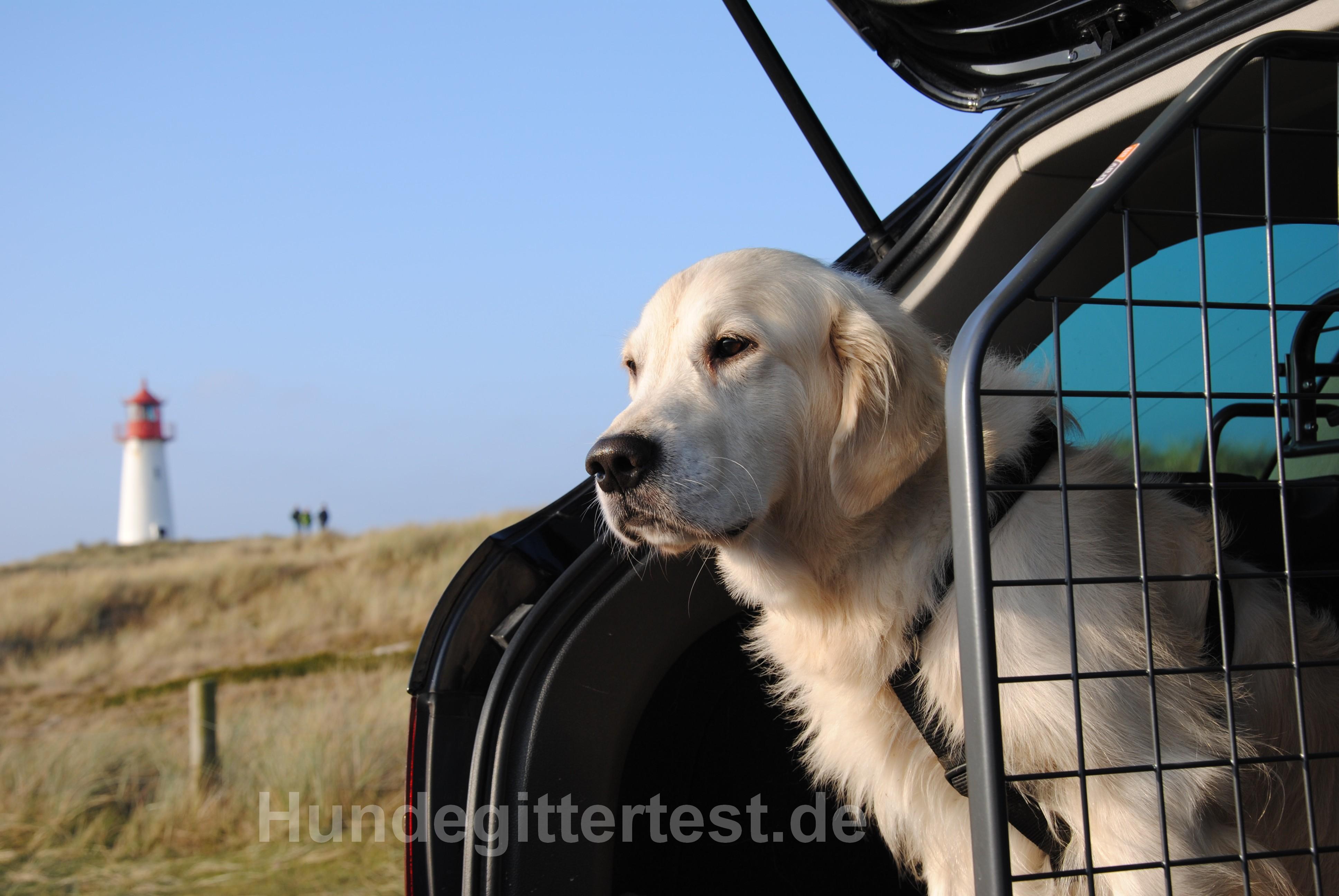 Hundegitter für den sicheren Transport